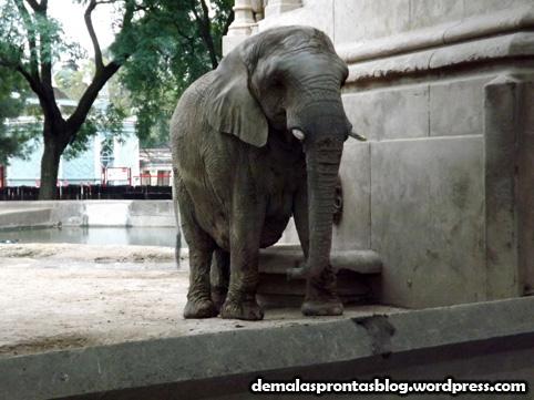 Um dos elefantes do Zoológico!